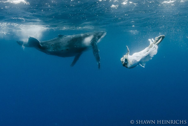 hannah fraser русалка с китом