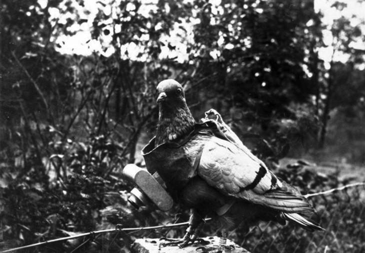 военный голубь с фотоаппаратом