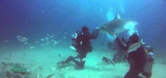 Зависимость от акул