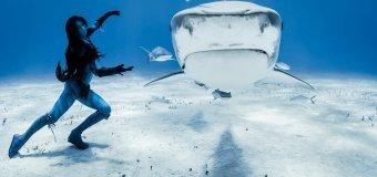 Акулы: мифы и заблуждения