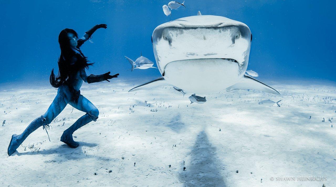 Русалка и акулы