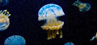 Медузы под водой