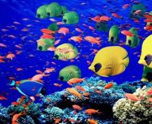 «Обитатели Красного моря»  на OCEAN TV