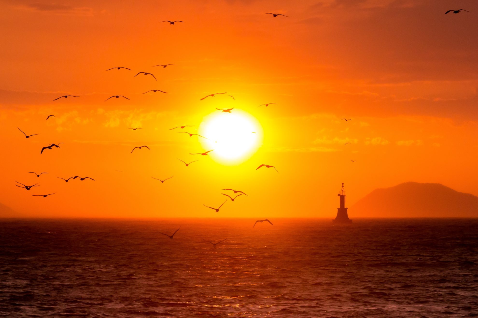 Чайки над морем. Адриатика. 2012 год. автор Олег Патрин