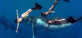Whale Fantasia