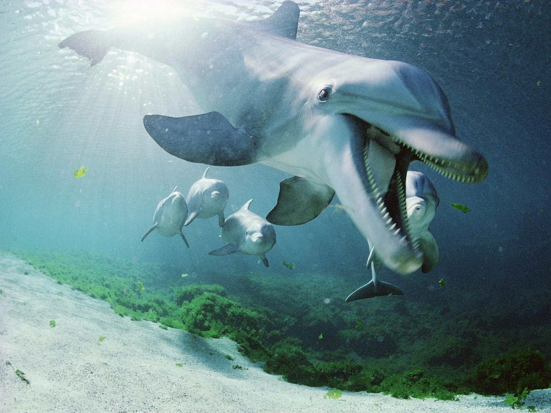 Дружелюбный дельфин.