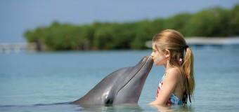 ХомоДельфиникус — дельфин разумный