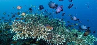Подводный мир 4К