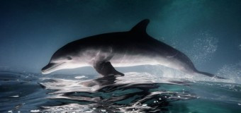 Удивительные морские животные фотографа Jorge Cervera Hauser