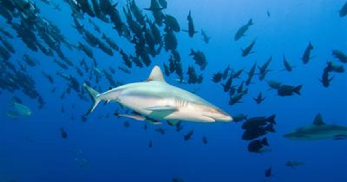 Акулий заповедник
