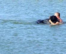 Медведь, океан и храбрый Adam Warwick, который спас медведя.