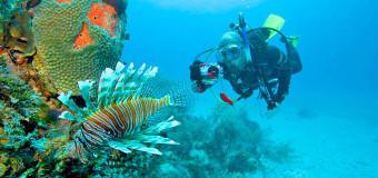 Багамские острова: тайны погружения