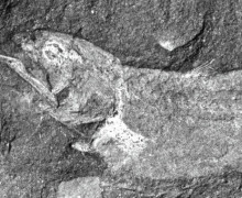Палеонтологи обнаружили останки древней сухопутной рыбы