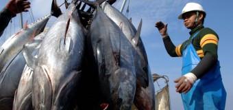 В два раза сократилось число морских обитателей с 1970 года