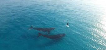 Встреча с китами