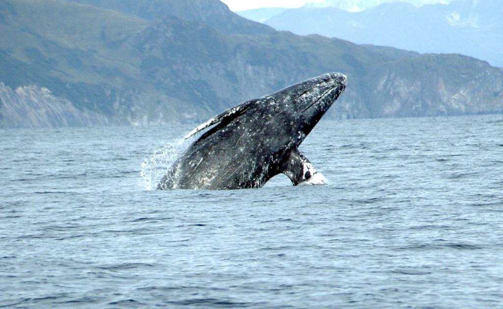 киты 2