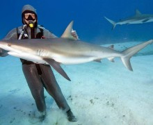Cristina Zenato — повелительница акул