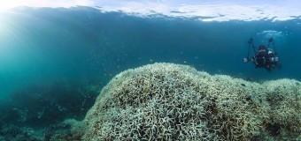 В Австралии стремительно гибнет крупнейшая в мире экосистема