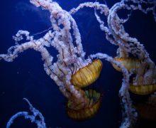 Таинственные обитатели океана