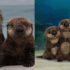 Морские обитатели из мультфильма «В поисках Дори»