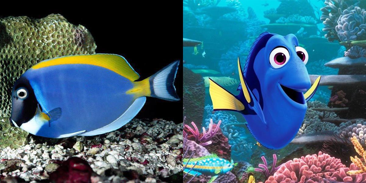 рыба дора фото