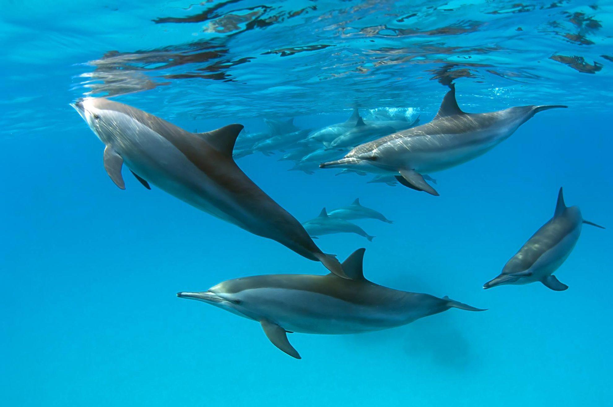 Дельфины Фотография Дмитрия Виноградова