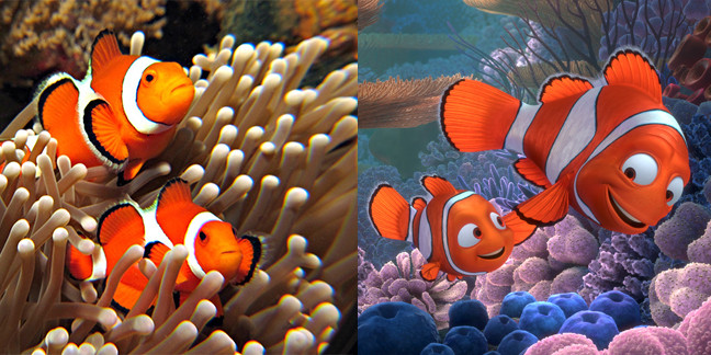 Рыба клоун Немо в поисках дори на ocean media