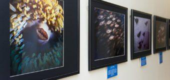 Открытие фестиваля фотографии «Дикий подводный мир»