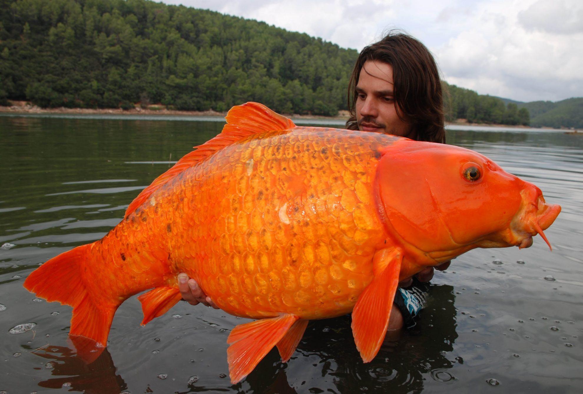 какая рыба круче для рыбака