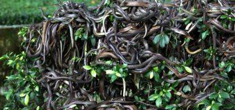 Остров гремучих змей