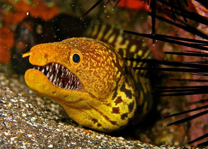 5 самых опасных морских существ