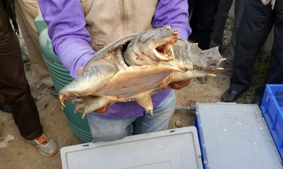 Черепахи были изъяты у индийских контрабандистов