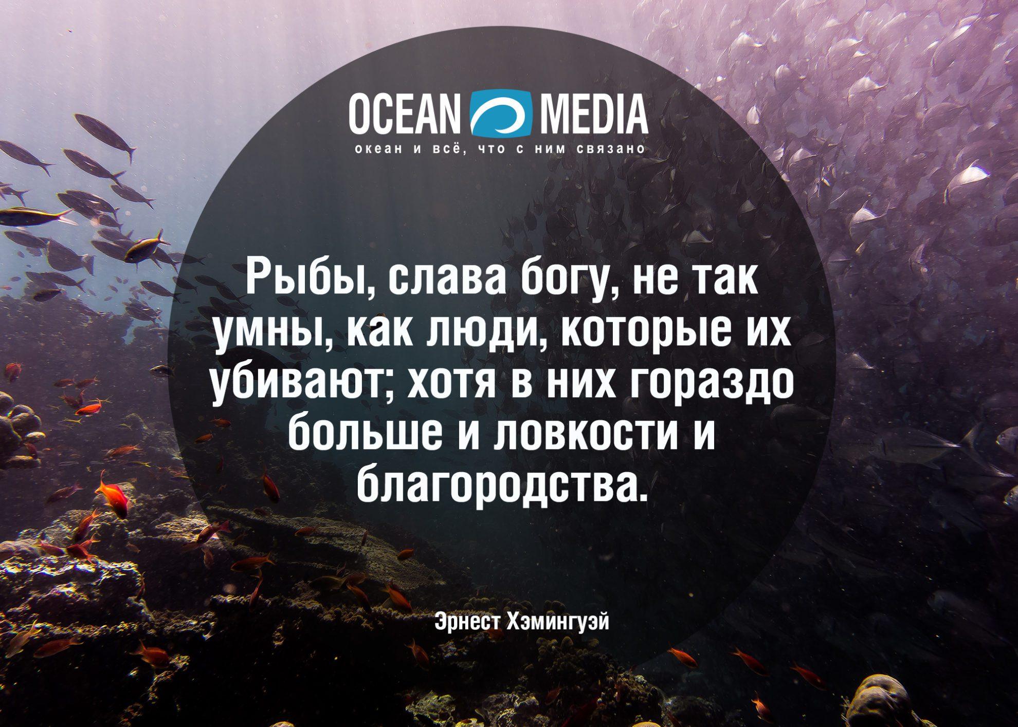 Цитаты про рыб