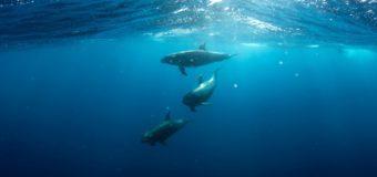 Строительство Керченского моста вызвало рост числа дельфинов