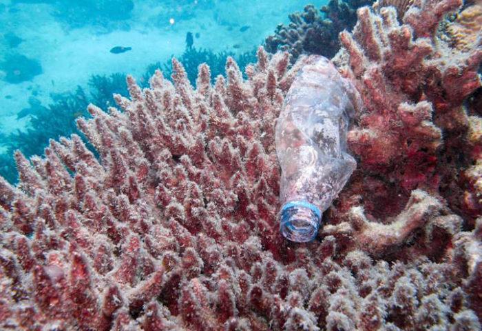 Согласно результатам исследования, около 80% всех пластиковых отходов, выброшенных на суше, в конечном итоге оказываются в океане