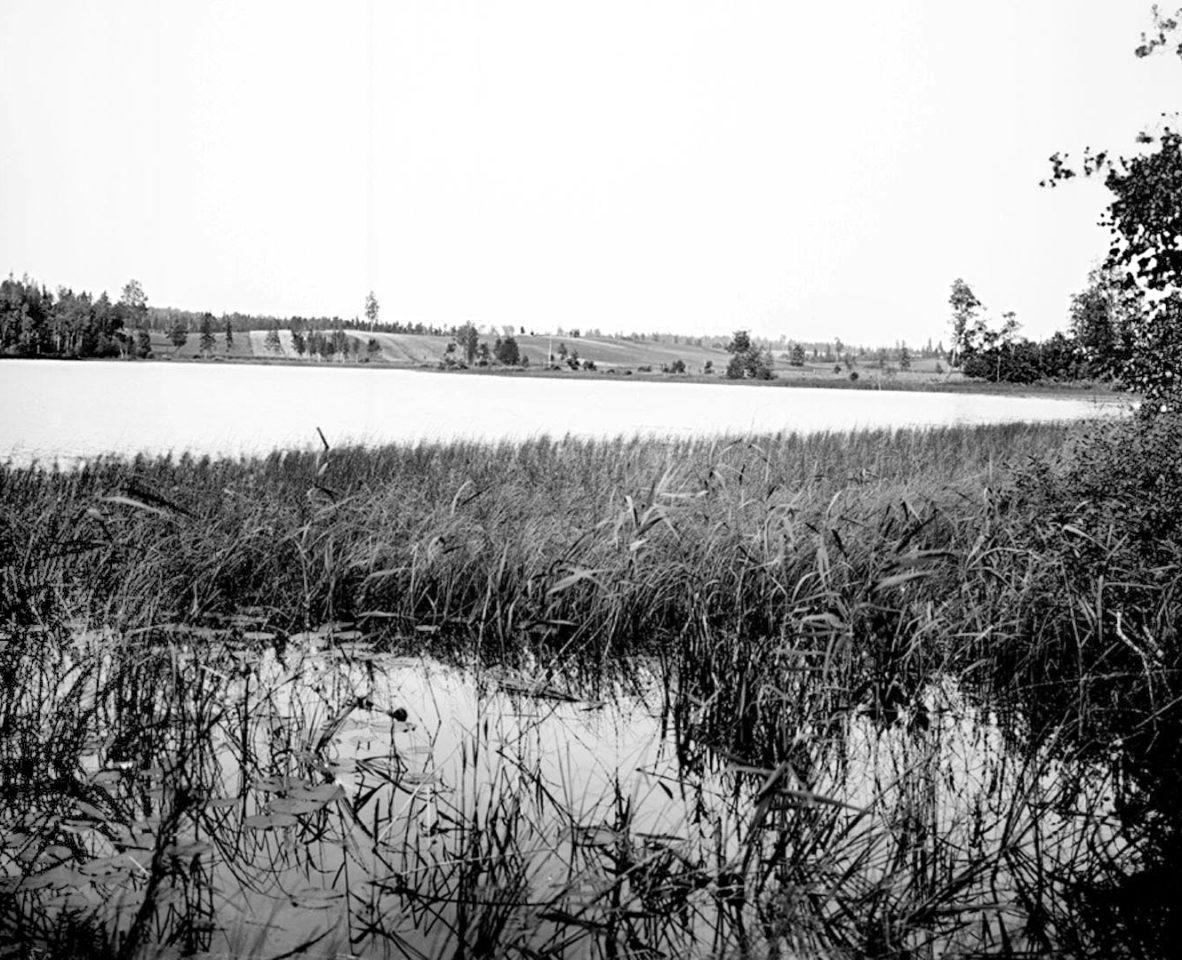 Вид озера Вершито на третьей версте от истока реки 1903 г. Тверская губерния. 2