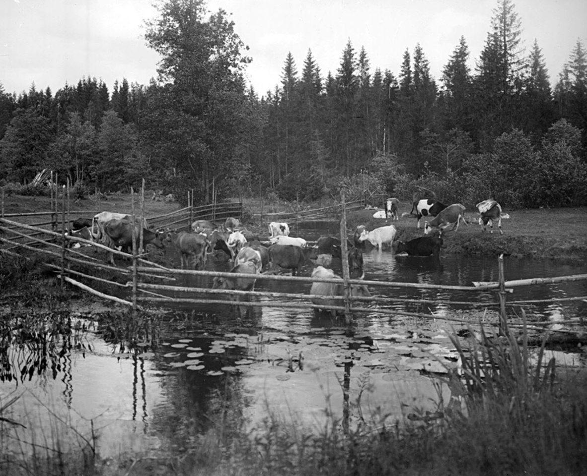 Вид реки Волги на четвертой версте, вид прудов. 1903 г. Тверская губерния. 2