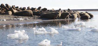 Завершилась экспедиция научной группы «Русской Арктики»