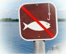 Весенний нерестовый запрет на рыбалку 2018 в Москве и Московской области