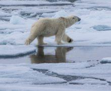В «Русской Арктике» начался сезон полевых научных экспедиций