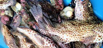 Рыбалка во Французской Полинезии