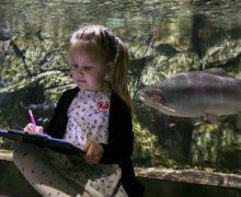 Арт-открытия и эко-откровения во Всемирный День Океанов