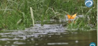 Ждем #ОранжевыйКораблик