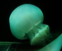 Новый обитатель Приморского океанариума удивляет многих посетителей