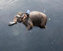 Фото года по мнению Reuters