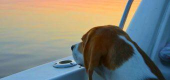 «Трое в лодке, считая собаку»