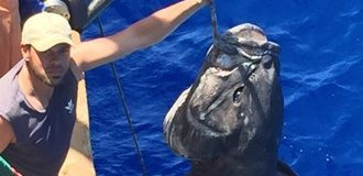 Во Владивостоке выловили огромного морского монаха