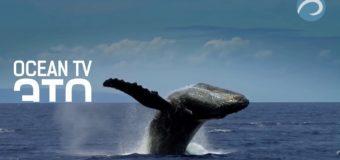Телеканал OCEAN-TV стал участником конкурса «Золотой Луч»