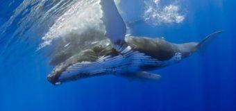 Приходите послушать китов
