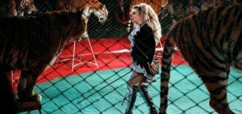В Португалии запретили использовать диких животных в цирках